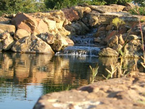 Natural Swimming/Organic Pools | Dallas-Fort Worth Metroplex