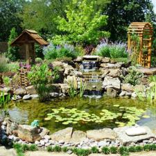 Koi Pond Portfolio